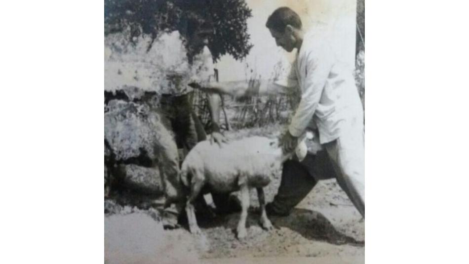 MENGALUS GARYESİ